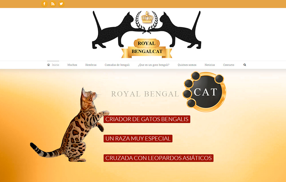 Royal Bengal Cat